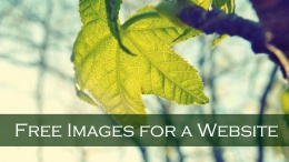 how to get free images for a website